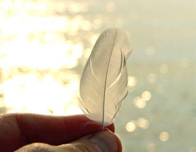 Featherornot